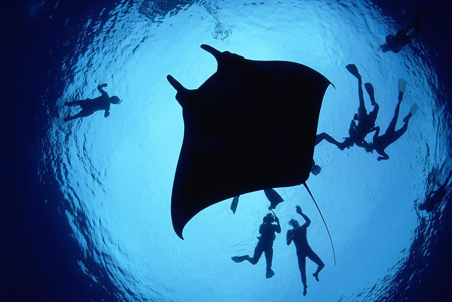 Manta-Ray-Hawaii